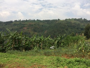paysage de Nyantende
